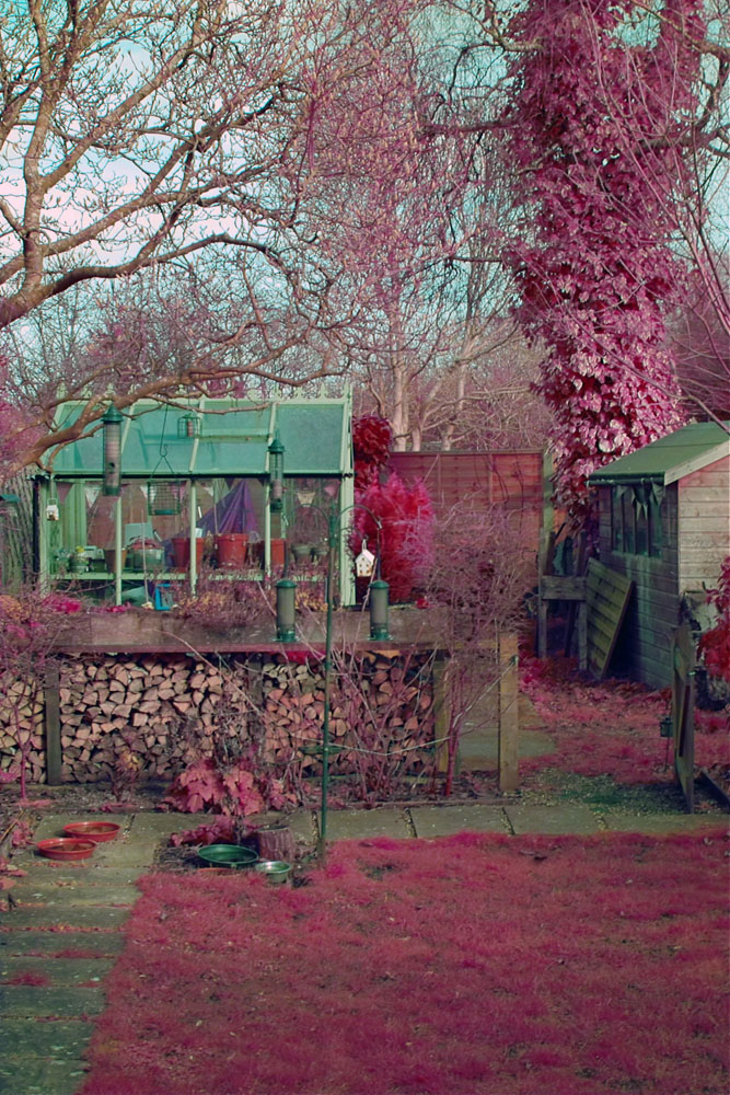 Attached Image: SDIM0129 resized auto colour magenta more red.jpg