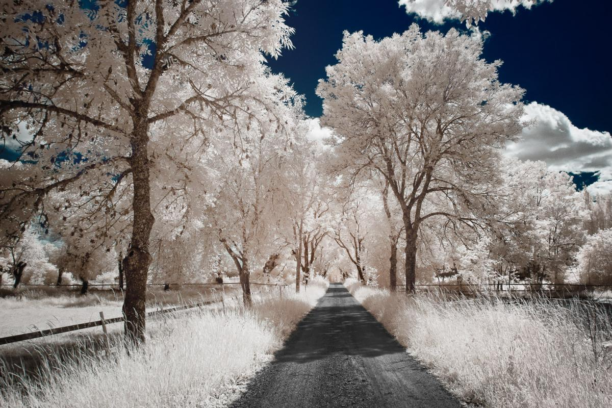 Attached Image: yann-philippe-infrared-infrarouge-40.jpg