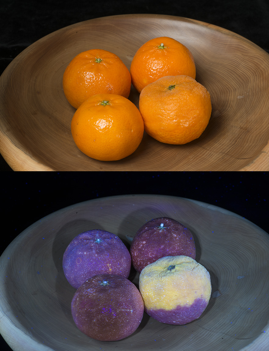 Attached Image: Satsuma mould.jpg