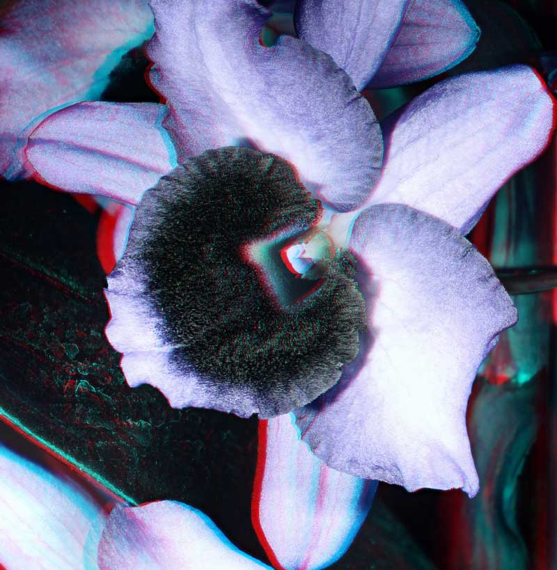 Attached Image: Stereo Orchid UV Nikkor 800.jpg