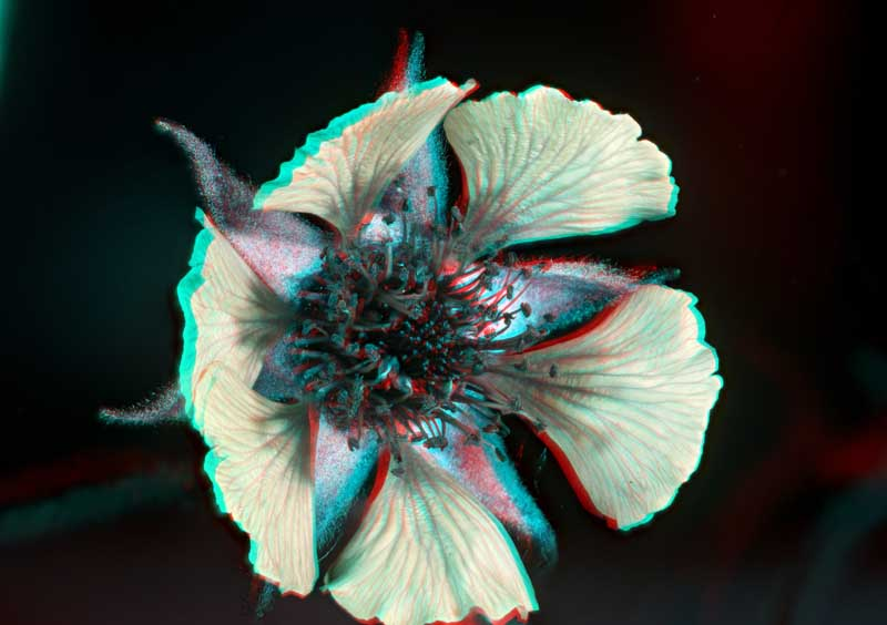 Attached Image: Stereo Geranium UV Nikkor 800.jpg