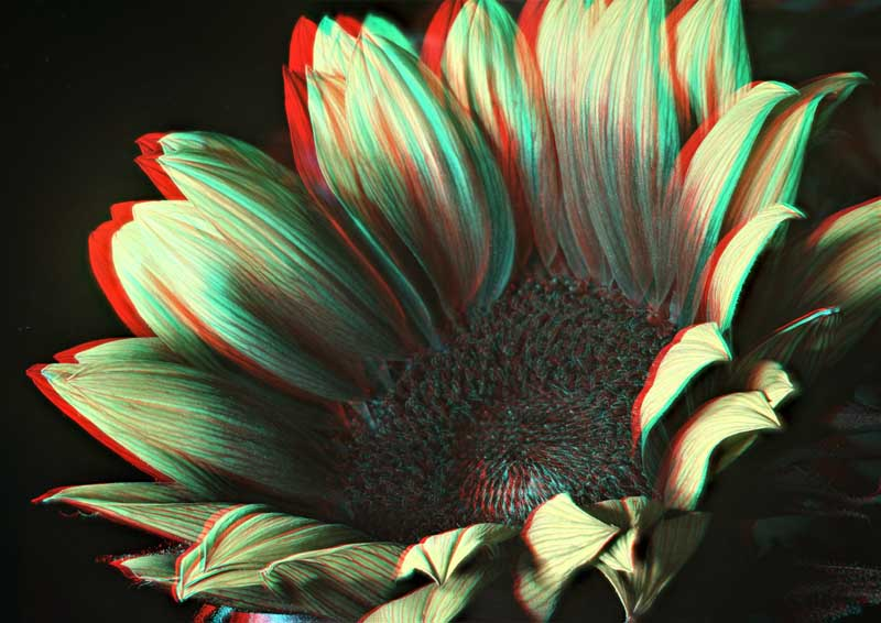 Attached Image: Stereo Sunflower UV 800.jpg