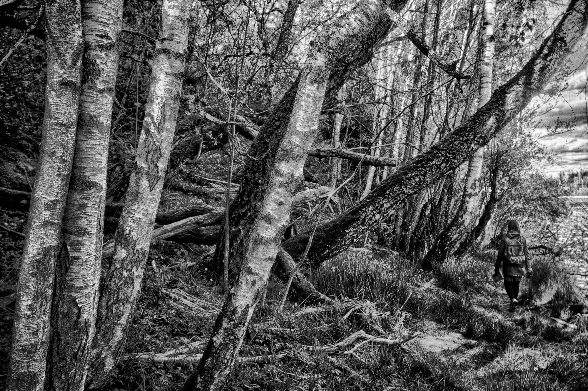 Attached Image: S202005090801_riparian_forest_CV85mmf3,5APO-LantharS_NEX-5NMonochrome.jpg