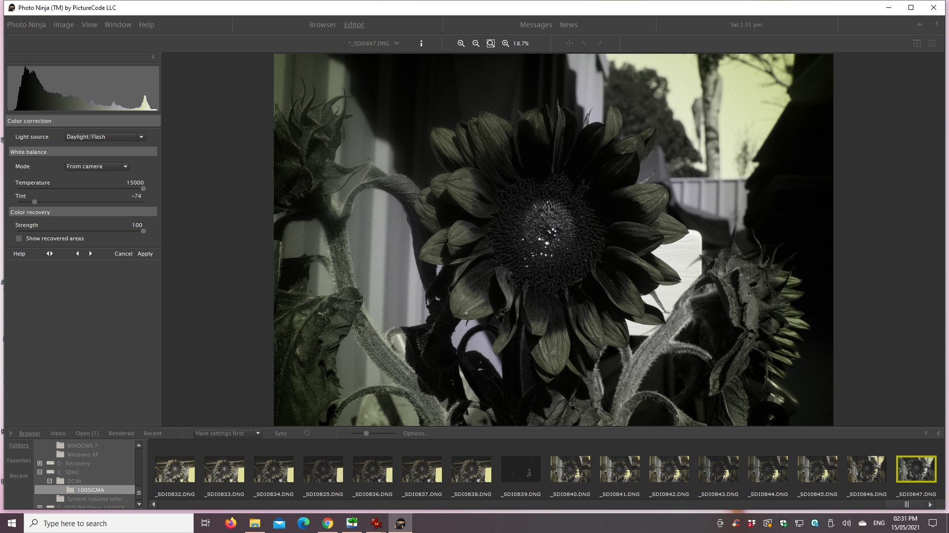 Attached Image: 2021 05 15 Sunflower, Canon 40mm, SEU3 + S8612 CWB in camera web 2.jpg