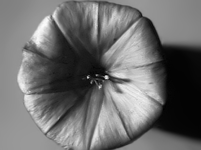Attached Image: Morning glory SWIR small.jpg