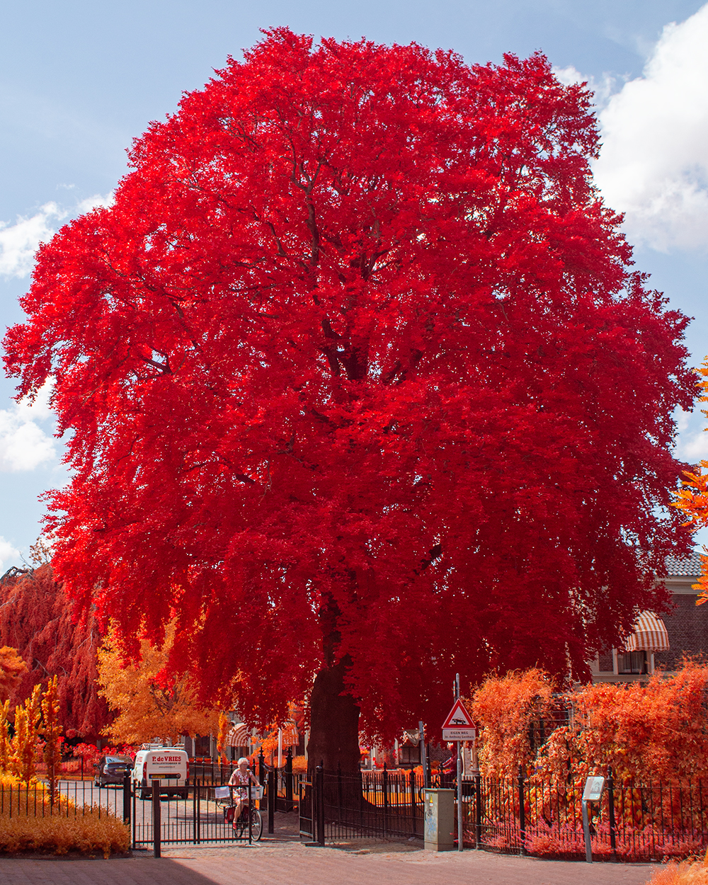Attached Image: Redtree.jpg