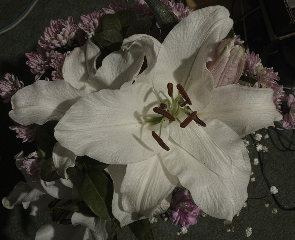 Attached Image: 2021 06 03 Oriental Lily 40mm pancake lens cool white light.jpg