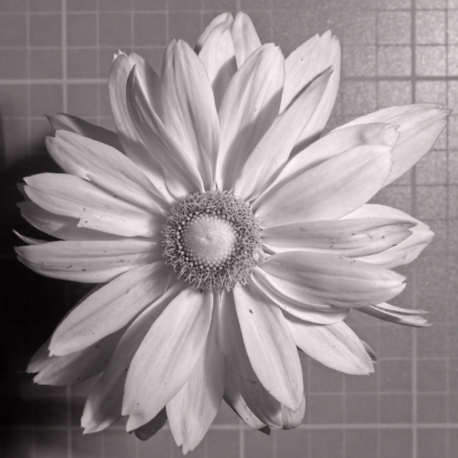 Attached Image: _DSC2568 IR850 UVP.jpg