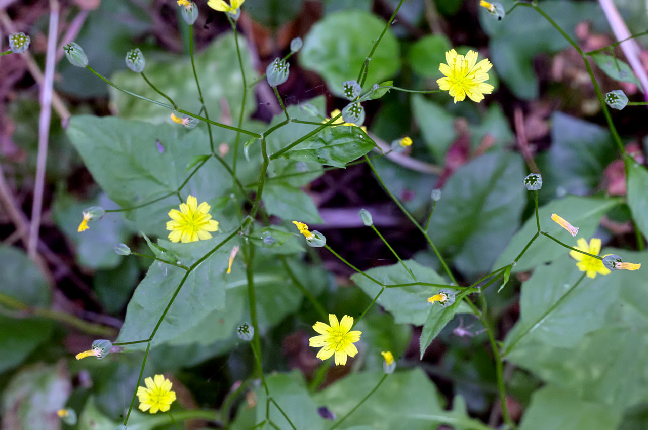 Attached Image: small_yellow_flower_visual_1280.jpg