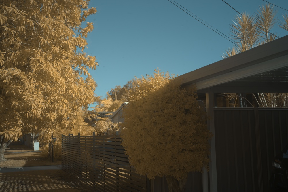 Attached Image: 2021 07 10 Golden Trees.jpg